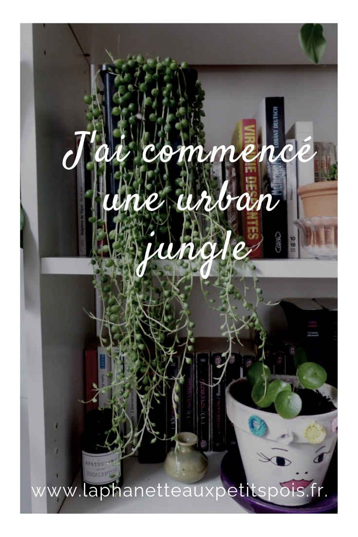 urban jungle plantes